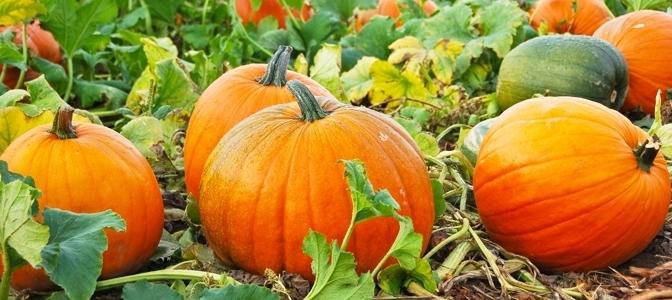Autumn Jack-o-Lanterns