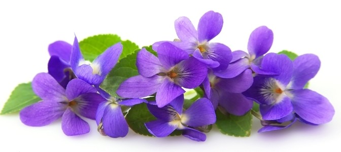 February Flower of the Month – Violet