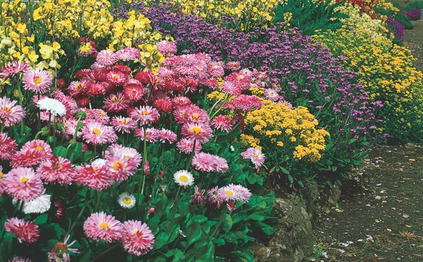 Perennials – A Garden Investment