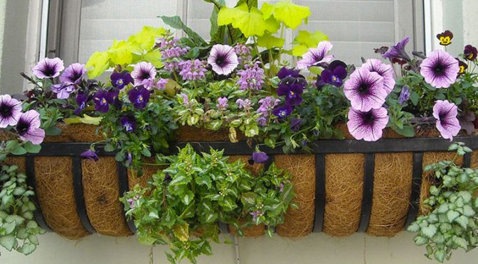Window Box Color All Year Round