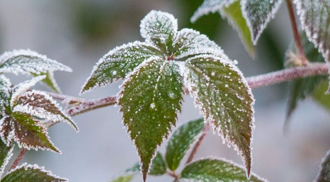 10 Tasks to Keep Your Garden Growing this Winter