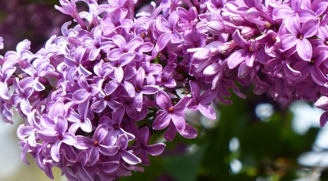 Fragrant Gardens Can Make Your Life Heavenly