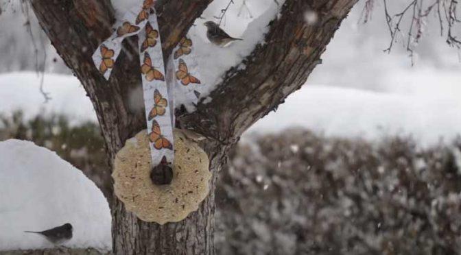How To Make A Birdseed Wreath