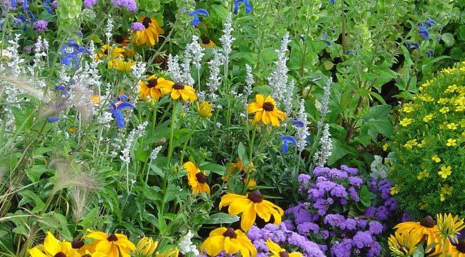 Summer Garden Cleanup