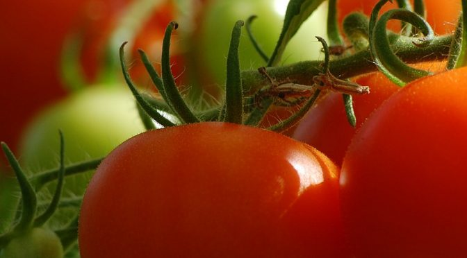 6 Simple Tips for Better Tomatoes