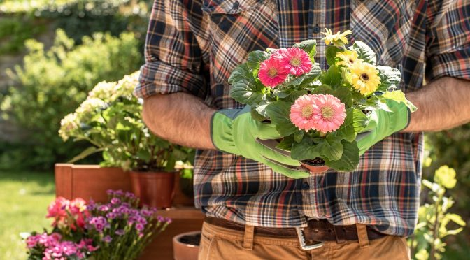 Why gardening during a pandemic is so comforting